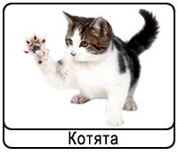 koshki-kot.png