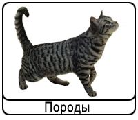 koshki-porodi.png