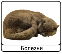 koshki-b.png