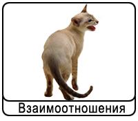koshki-vz.png